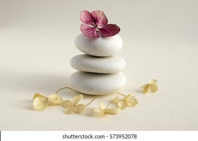 Harmony and balance, cairns, simple poise stones on white background, rock zen sculpture, five white pebbles, single tower, simplicity, dry hydrangea white and red flowers