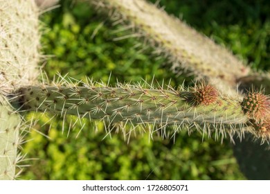 harmony of natural cactus plant thorns and green