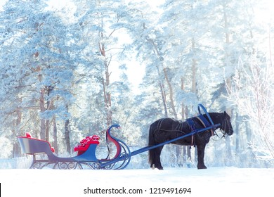 Harnessed horse with a sleigh in the snow-covered forest. Winter in the country.