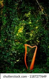 Harp.Paraguayan harp.harp in forest