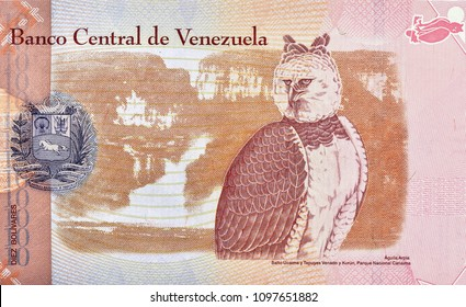 Harpy eagle, Aguila Arpia (Harpia harpyja). Portrait from Venezuela 10 Bolivares 2007 Banknotes.