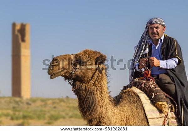 HARRAN, SANLIURFA, TURKEY - MAY 15, 2014: Man in local dresses rides a camel in the town of Harran, Sanliurfa province, Turkey.