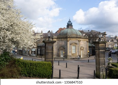 Harrogate, North Yorkshire, UK.3.5.2019.White Prunus blossom next to Valley Gardens entrance with Royal Pump Museum.