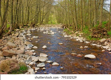 Harthope Burn as it meanders its way throught the Harthope Valley surrounded by trees in the heart of the Cheviots near Wooler in Spring, Northumberland National Park, England, UK