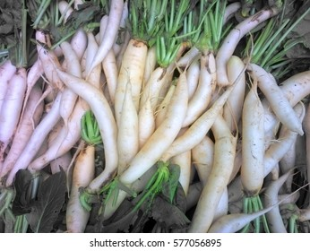 Harvest in Asia. Summer-and-winter radish scattered evenly in bazaar. Background