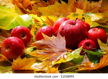 Harvest. Autumn still life with red apples and leaves