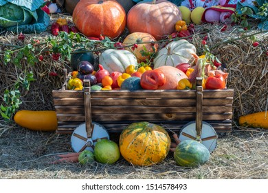 Harvest autumn vegetables, close up. Pumpkins, tomatoes, melons, peppers, eggplants and other autumn vegetebles . Organic food background. Autumn food concept. Healthy organic harvest vegetables