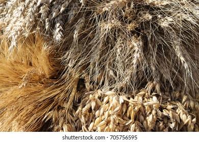 harvest bundle of ears