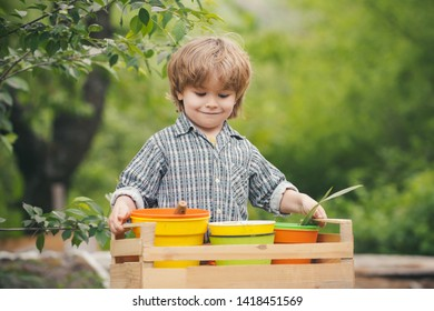 Harvest. A child holds pots with plants. Garden. Home garden. Healthy nutrition. Organic farm.