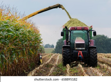 Harvest corn harvester and tractor in corn