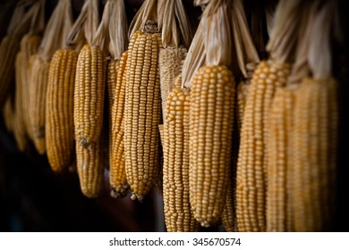 Harvest corn in traditional chinese farm