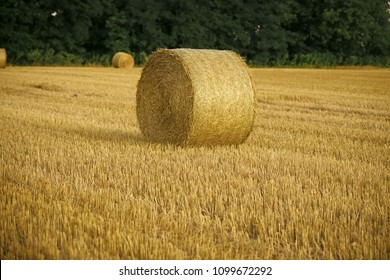 Harvest crop harvesting Haylage rolled on cut grass fodder Hay bale dry on field, agriculture. Fodder, forage, haymaking. Agriculture, farming, ecology.