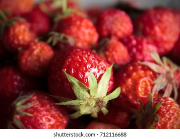 Harvest of delicious strawberries
