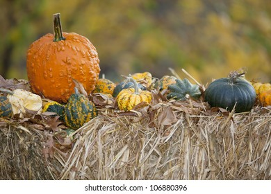 Harvest of different Pumpkins on  hay with autumn nature background