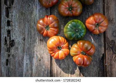 Harvest of an ecological urban tomato garden for production of kilometer zero in the area of the city of Barcelona in Catalonia Spain