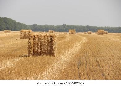 Harvest fields (Straw bales in the field)