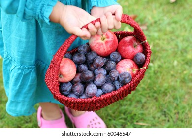 Harvest of fresh fruits in the basket