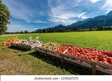 Harvest of a group of orange, striped and grey pumpkins for sale inside large fruit crates on a green grass lawn - Bavaria, Germany, Europe