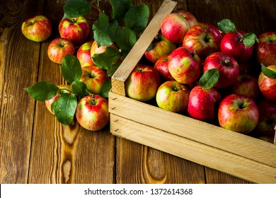 harvest of juicy apples with leaves in a box on the table