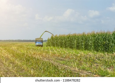harvest of juicy corn silage by a combine harvester and transportation by trucks, for laying on animal feed.