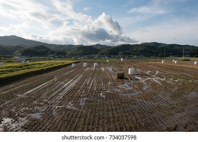 Harvest landscape after harvestOctober 4, 2017 in a village in Korea. The straw in the rice field is like a marshmallow.