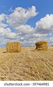 Harvest landscape with straw bales amongst fields in autumn, Belarus