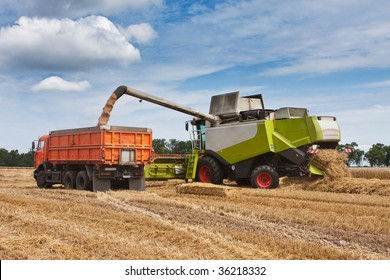 harvest, loading of wheat to the truck
