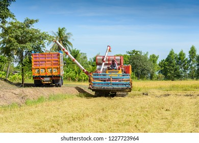 Harvest machine or Combine harvester loading seeds in to trailer on rice field. Harvesting is the process of gathering a ripe crop from the fields in thailand