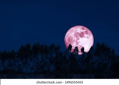 harvest pink moon on night sky back over silhouette pines tree and cloud, Elements of this image furnished by NASA