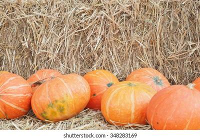 Harvest pumpkin rice straw background