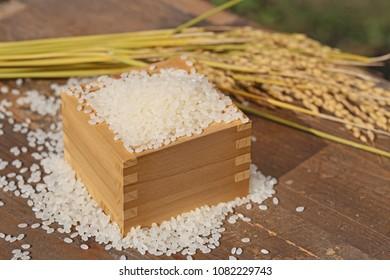 Harvest of Rice