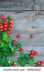 Harvest of small red cherry tomatoes on a gray old wooden background