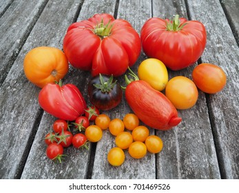 Harvest of tasty, historic tomato varieties on an old wooden table