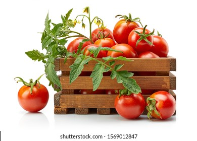 Harvest tomatoes in wooden box with green leaves and flowers. Vegetable still-life Isolated on white background.