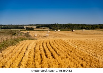 The harvest wheat field with straw bales after harvest, combines harvesting the wheat, combines at sunset golden fields of straw a view through the window of fields rows of straw off to the horizon