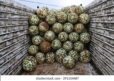Harvested agave for Tequila production, Jalisco, Mexico