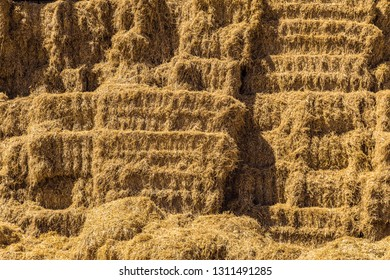 Harvested bales in piles of hay for cattle. Agricultural high haystack.