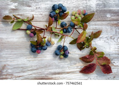Harvested Blueberries on wood with floral background.
