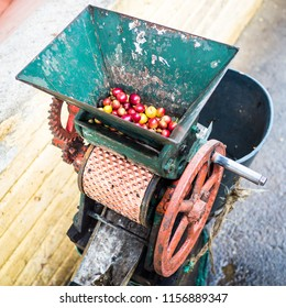 Harvested coffee beans ready to have their pulp removed are placed into a traditional hand turned machine.