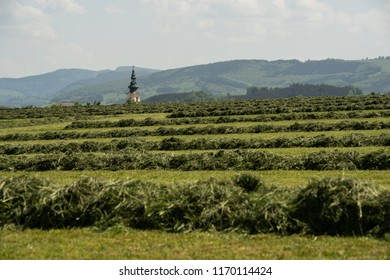 harvested hay on the field - church spire and hills in the background - St. Peter in der Au Mostviertel Austria