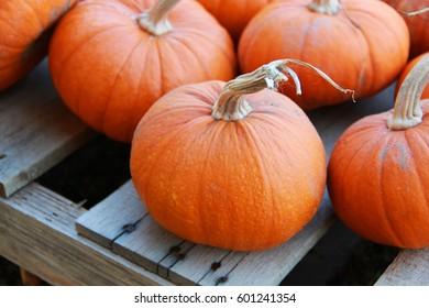 Harvested orange pumpkins at a local farm