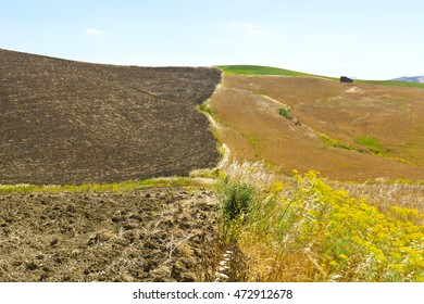 Harvested Plowed Fields on the Hills in Sicily