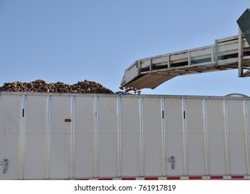 Harvested potatoes shot into transport truck with automated machinery.