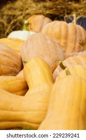 Harvested pumpkins with fall flowers on the background