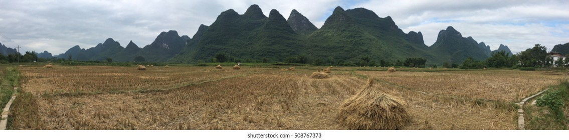 Harvested rice field below the hills in Yangshuo, China