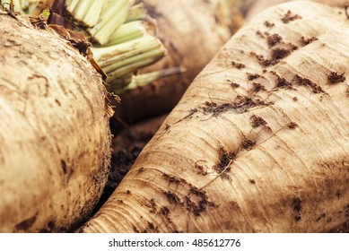 Harvested sugar beet crop root pile on the ground, selective focus