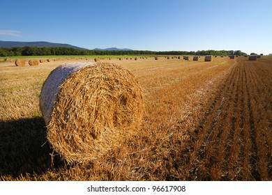 Harvested wheat field. Large bales of straw in the foreground. Clear skies