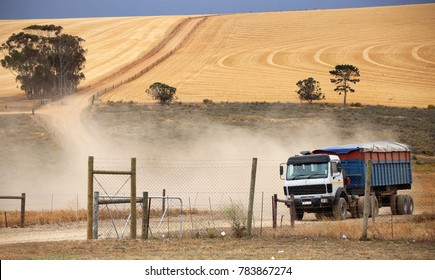 harvested wheat field, Western Cape, South Africa