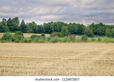 Harvested wheat fields under a cloudy sky