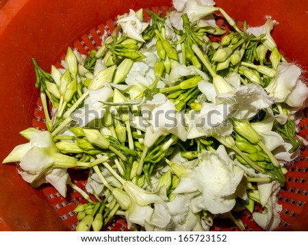 Harvested White Edible Loroco Flower Buds Stockfoto Jetzt
